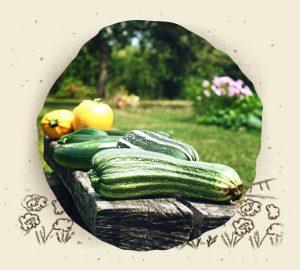 Jardin potager culture
