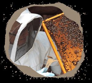 abeilles ruche apiculteur