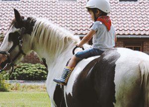 cours cheval apprendre