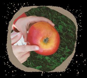 pomme ferme