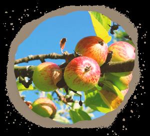 Pommes jus Ferme